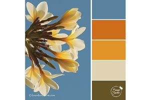 Tropical Sky Color Palette