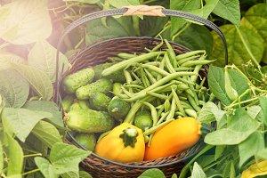 Basket of Vegetables in Day Light