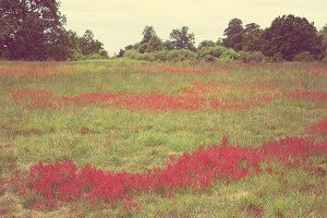 Red meadow