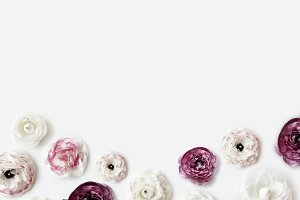 White & purple ranunculus background