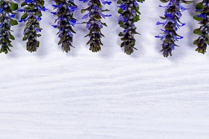 Romantic Blue Flowers