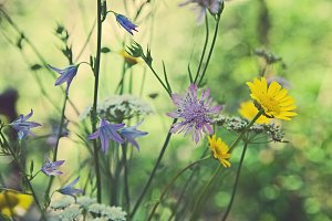 iseeyouphoto wildflowers