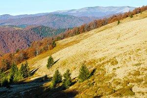 Morning autumn Carpathian.