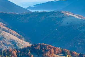 Colorful trees on slope
