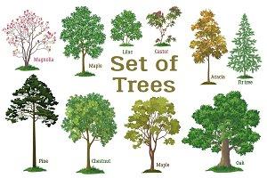 Set Trees, Bushes and Landscapes