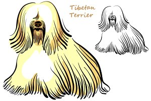 Dog Tibetan Terrier