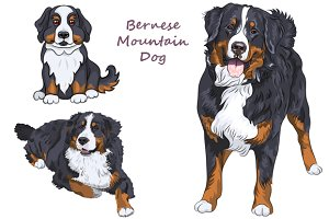 Bernese mountain dog SET