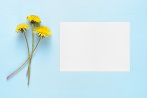 Dandelion flowers and greeting card