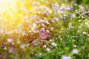 Alarm clock in grass flower