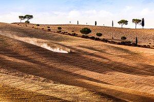 Harvest season in Tuscany, Italy.