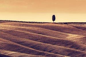 Tuscany autumn landscape. Panorama.