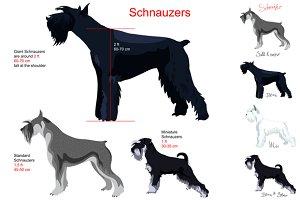 Dog schnauzer. Big SET