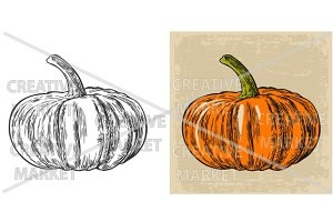 Pumpkin.  Vector vintage engraving