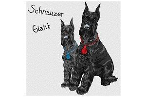 Giant Schnauzer SET