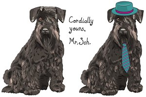 Black Miniature Schnauzer SET