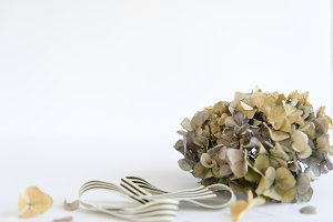 Neutral Dried Hydrangea Set