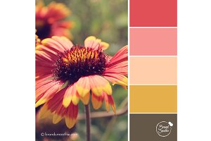 Red Summer Color Palette