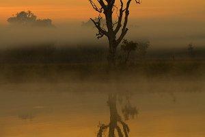 Yellow waters, Kakadu, Australia