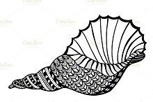 shell.