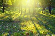 sunlight park forest landscape