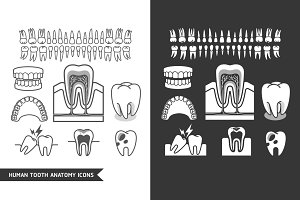 Human Tooth Anatomy Icons Set.