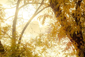 Sun Glowing Through Autumn Leaves