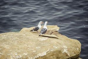 Seagulls Chatting