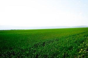 Green Flowers Field