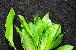 ramson (bear garlic)