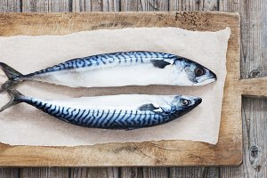 Two raw fresh mackerel fishes