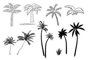 №124 Palm tree
