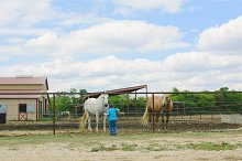 Cowboy with horses at stable