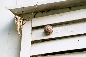 Snail on a garden rough wall