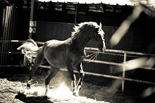 Horse and Ranch No.5