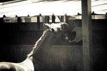 Horse and Ranch No.4