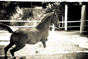 Horse and Ranch No.3