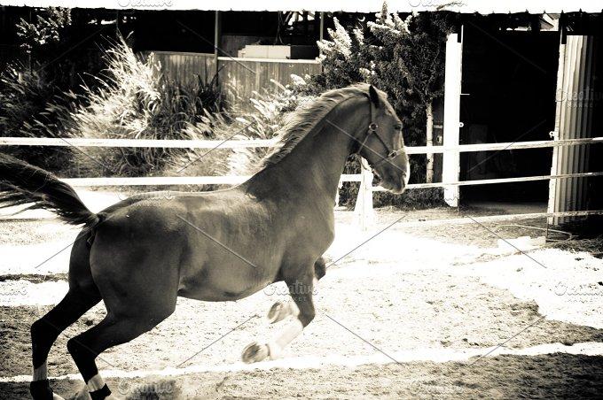 Horse and Ranch No.3 - Animals