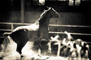Horse and Ranch No.2