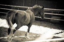 Horse and Ranch No.1