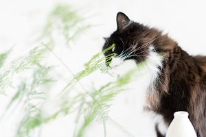 Delicate Ferns & Fluffy Cat Bundle