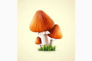 Three Mushrooms