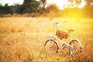 Bicycle in summer