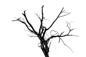 Abstract dead tree