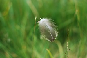 Feather balancing on grass