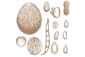 Sketches of nuts, beans and seeds