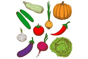 Color sketches of healthy vegetables