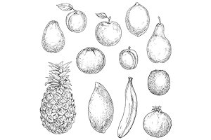 Tropical and garden fruits sketches