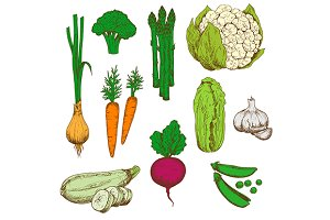 Farm vegetables retro color sketches