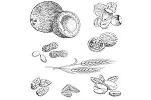 Sketched nuts, beans, seeds