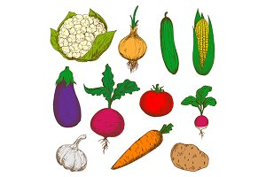 Color ripe vegetables sketches set